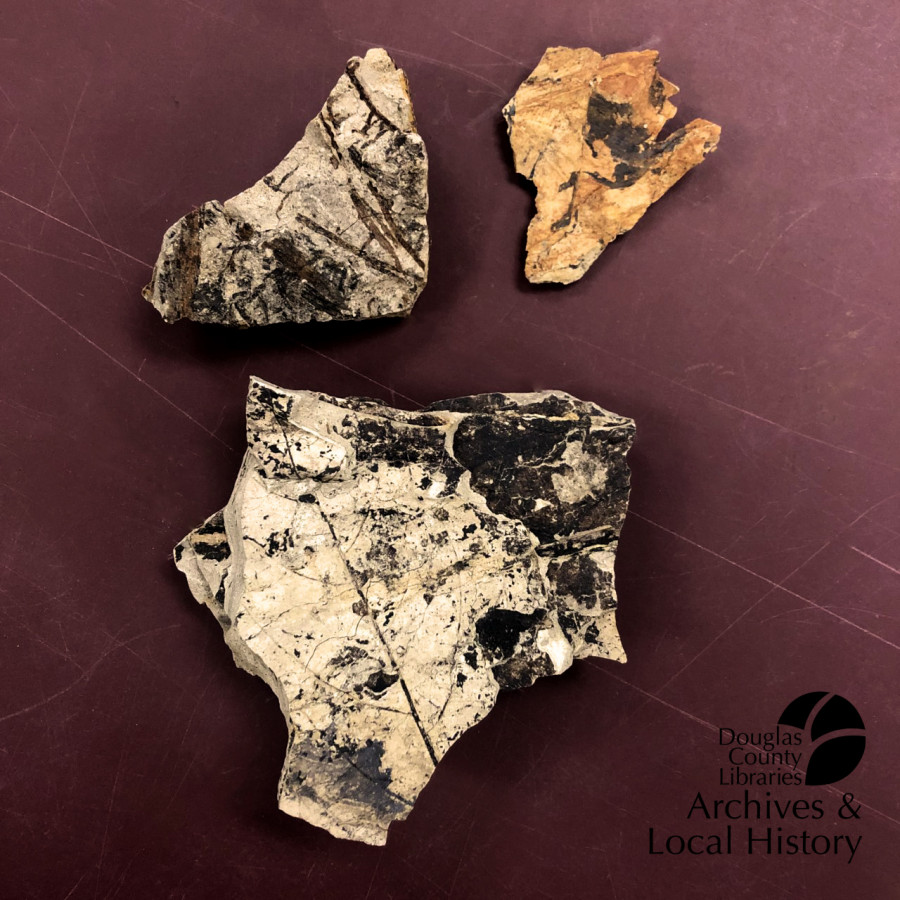 Image shows three fossil specimens containing leaf imprints from approximately 55 to 64 million years ago. They won the Archives Award for oldest object.