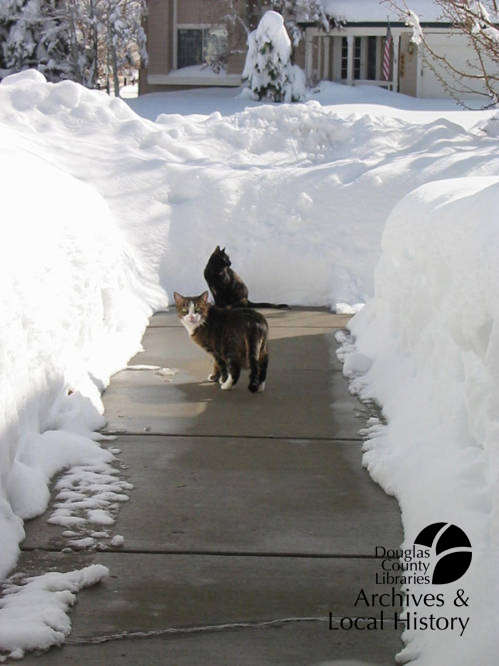 Image shows two cats exploring a sidewalk cleared of snow. The snow banks on either side are 2 or 3 feet high. One cat looks back with an expression of horror. This image won the Archives Award for Biggest Nope.